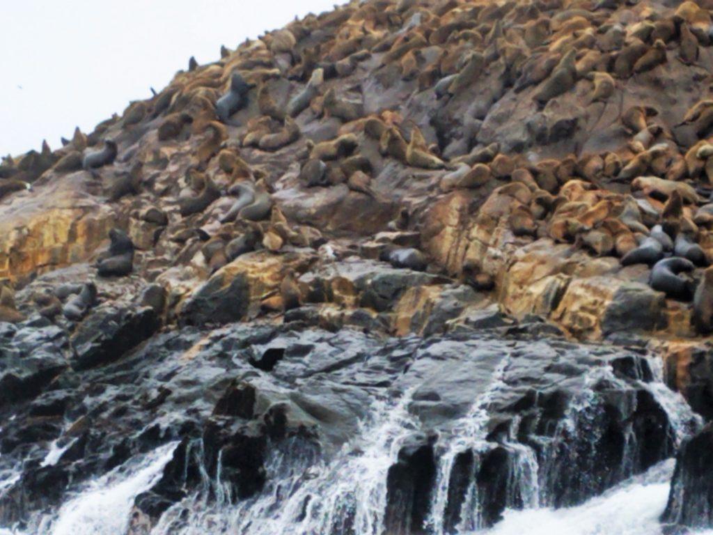 Colony of sea lions on Palomino Island