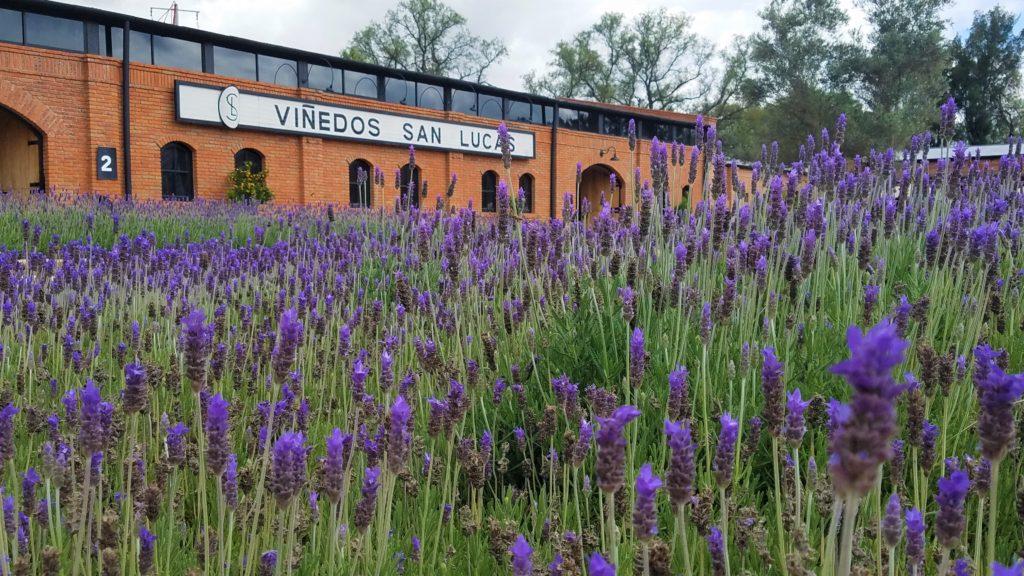San Lucas Winery near San Miguel de Allende, Mexico