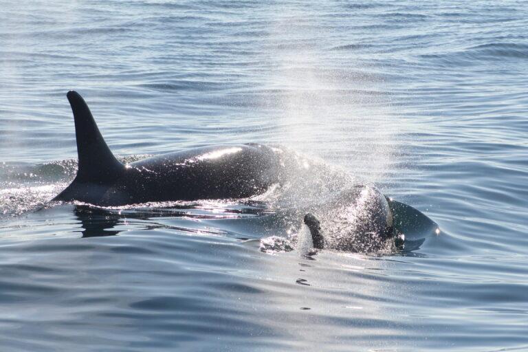 Photo Journey: Alaska Wildlife
