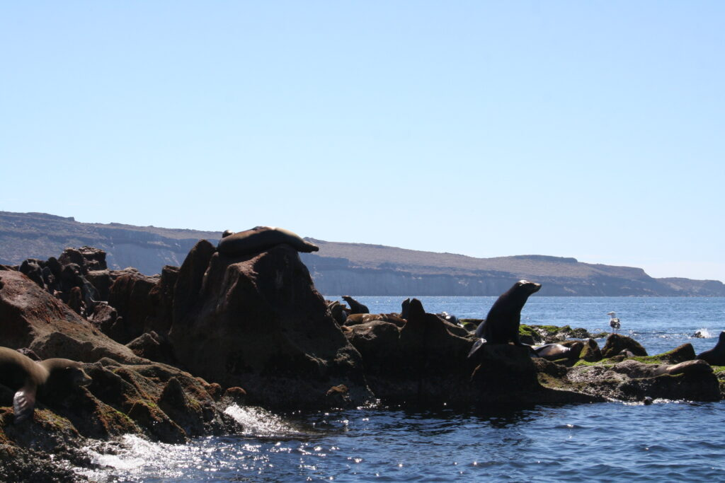 Sea lions on Isla Espiritu, Mexico